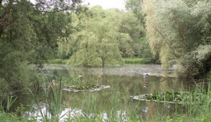 teich website